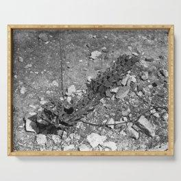 Excavator tracks Serving Tray