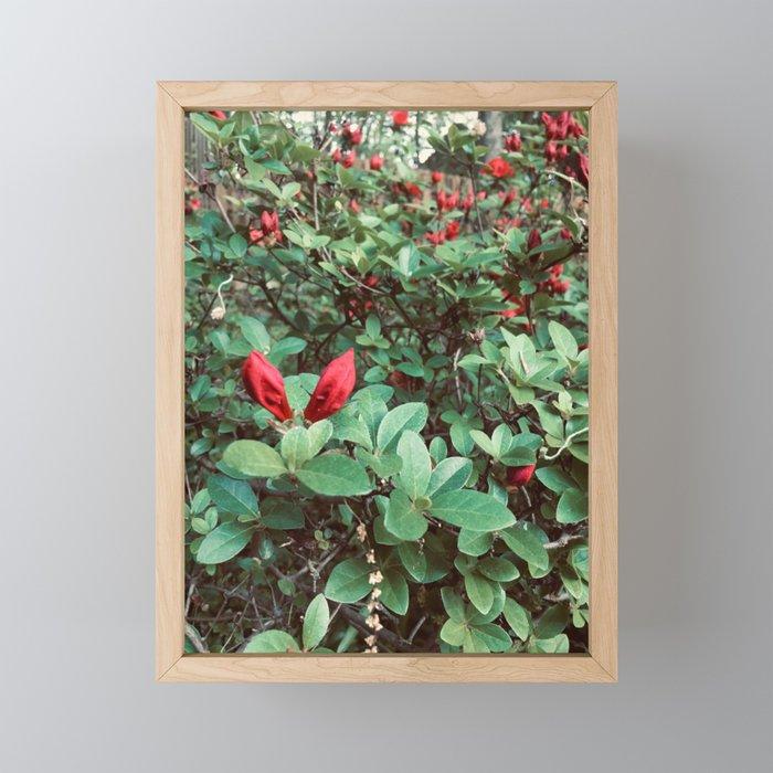 A New Spring Framed Mini Art Print