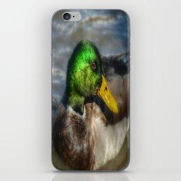 Magnifient Mallard Duck iPhone Skin