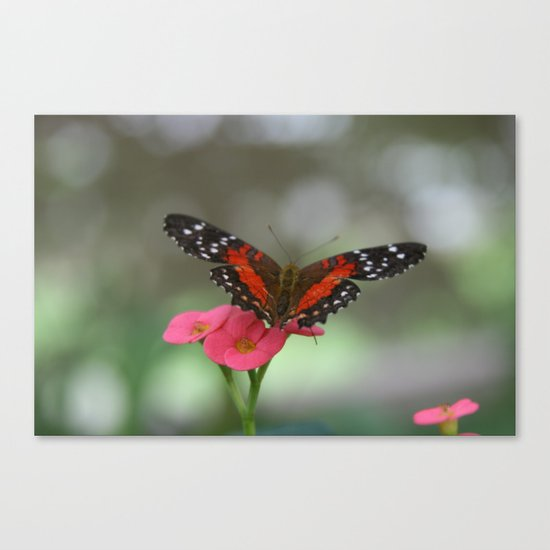 Butterfly House 2 Canvas Print