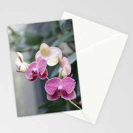 Pink Orchid Party Stationery Cards
