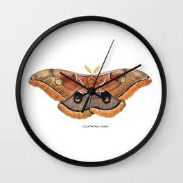 Polyphemus Moth (Antheraea polyphemus) II Wall Clock