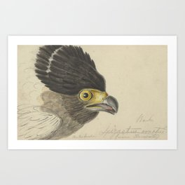 Bird  by Pieter van Oort 7 Art Print