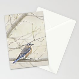 Eastern Bluebird Stationery Cards