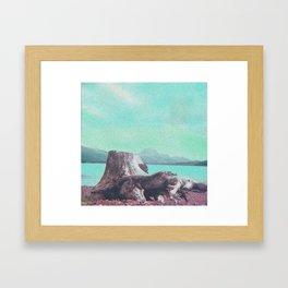 Ancient Pine Tree Framed Art Print