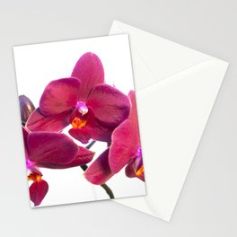 Orchid Flowers 02 Stationery Cards