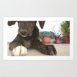 Puppy Paws Art Print