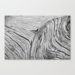 Wood at Arches Canvas Print