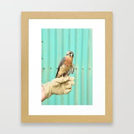 American Kestrel Falcon Bird Wildlife Northwest Framed Art Print