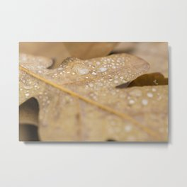Wet forest #2 Metal Print