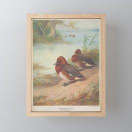 Ferruginous Duck9 Framed Mini Art Print