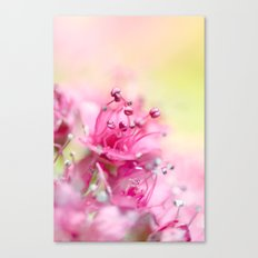 Pink Magic Canvas Print