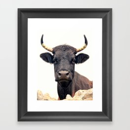 Yellow Horns Framed Art Print