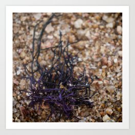By the Seashore - Purple Seaweed Art Print