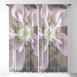Milkweed flower close up Sheer Curtain