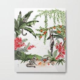 Ring-tailed lemurs of Madagascar .1 Metal Print