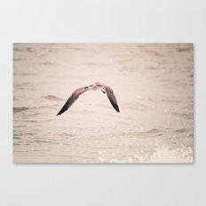 solo flight - seagull - beach Canvas Print