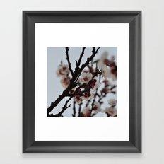 Spring 2013 03 Framed Art Print