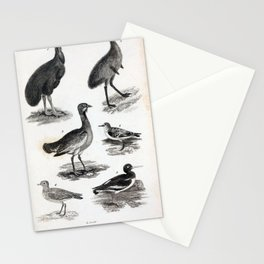 005 Emu Cassowary Great Bustard Sanderling Oyster Catcher Golden Plover9 Stationery Cards