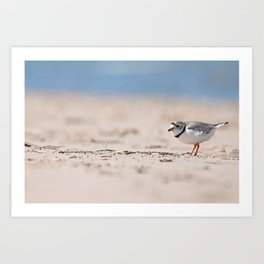 Great Lakes Piping Plover Art Print