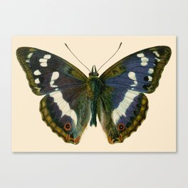 Big Butterfly Canvas Print