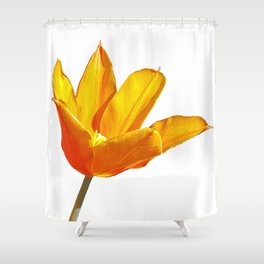 Orange Tulip Shower Curtain