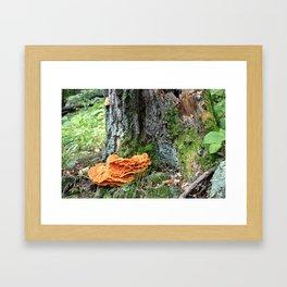 Reclamation Framed Art Print