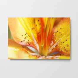 Asiatic Lily 12 Metal Print