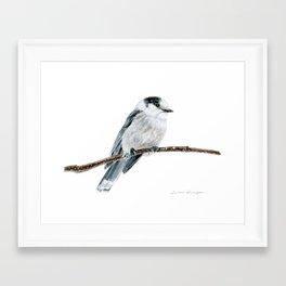 Gray Jay by Teresa Thompson Framed Art Print