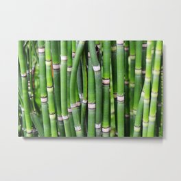 Bamboo Green Lines Stripes Reed Stalk Metal Print