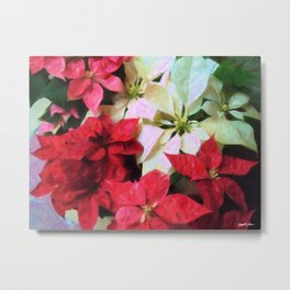 Mixed color Poinsettias 1 Vivid Oil Metal Print