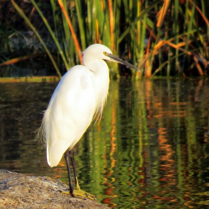 Egret at the lake Comforters
