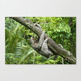 Three-toed sloth climbing tree Canvas Print