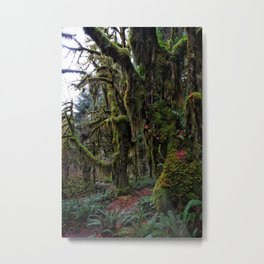 Hoh, Moss Covered Trees Metal Print