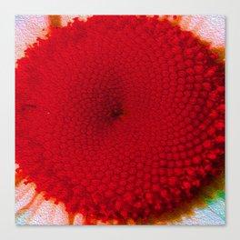 Red Vineyard Daisy Canvas Print
