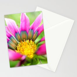 Bright Multi-color African Daisy Stationery Cards