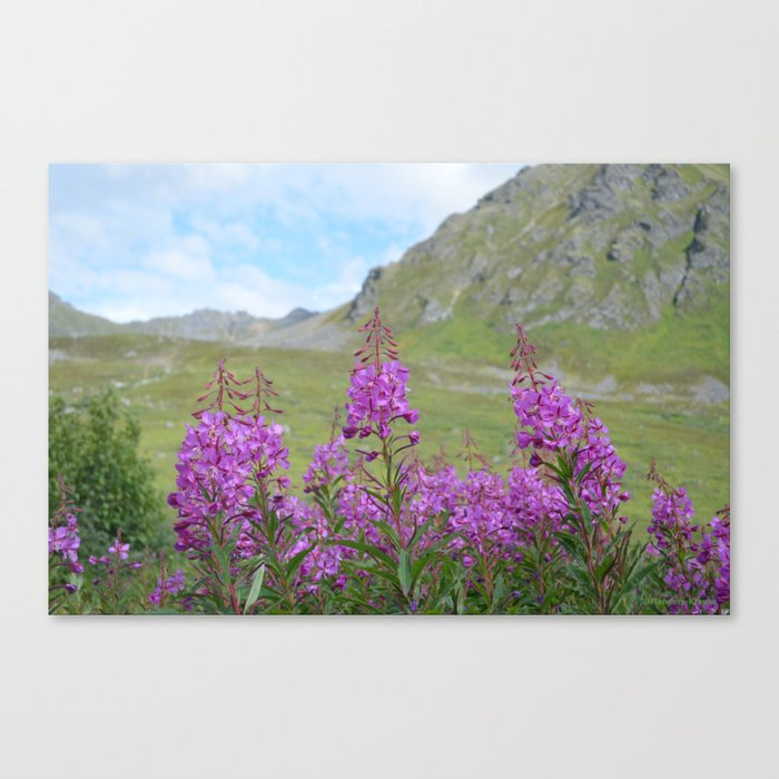 Hatcher Pass Fireweed Canvas Print