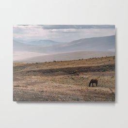 Wild horse in Ecuador Metal Print