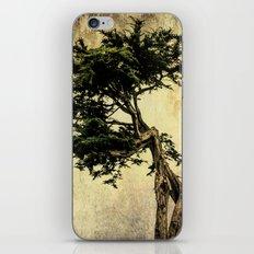 Cypress Tree iPhone & iPod Skin