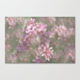 Abstract Pink and Green Flowers Canvas Print
