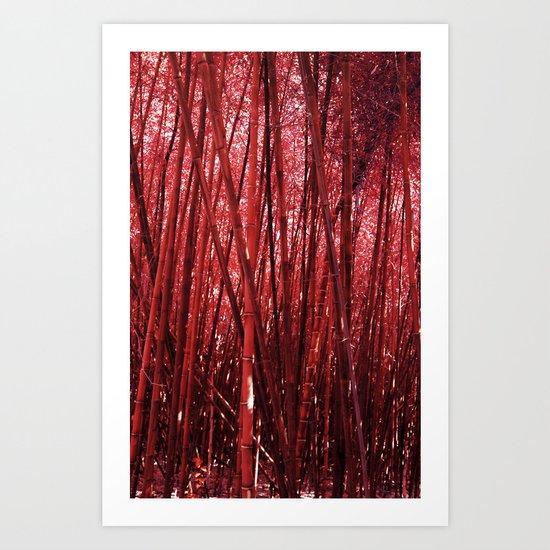 Red Bamboo Art Print