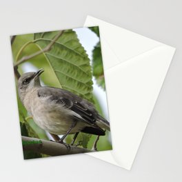 Mockingbird in a Mulberry Tree Stationery Cards