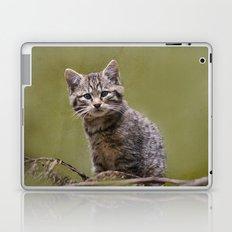 Scottish Wildcat Kitten Laptop & iPad Skin
