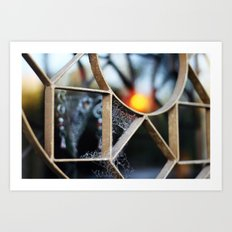 The fence, the spiderweb and the sun Art Print