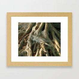 Roots in the Afternoon Framed Art Print