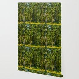 Forest in Lubrtów Wallpaper