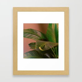 Passionz Framed Art Print