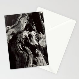 Black and White Tree Bark and Roots Outdoor Nature Photograph Stationery Cards