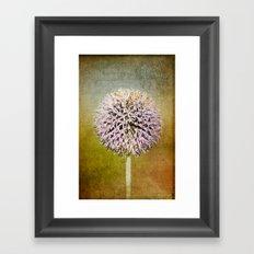 Allium flower Framed Art Print