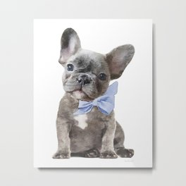 French bulldog, Frenchie, Blue Grey by Amanda Greenwood Metal Print